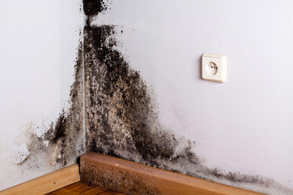 Moho en pared por condensación
