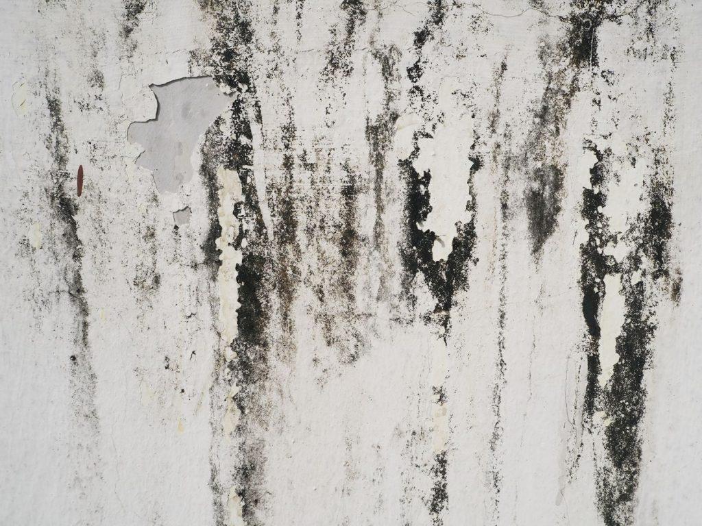 Moho negro en paredes y madera