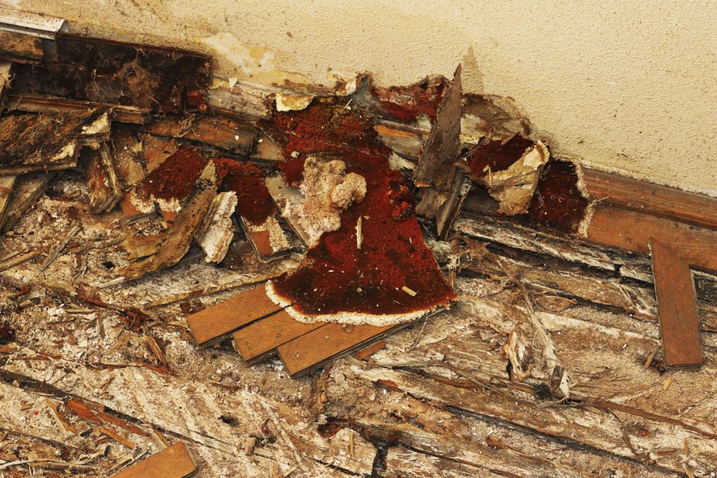 Tarima de madera estropeada por el moho y la humedad
